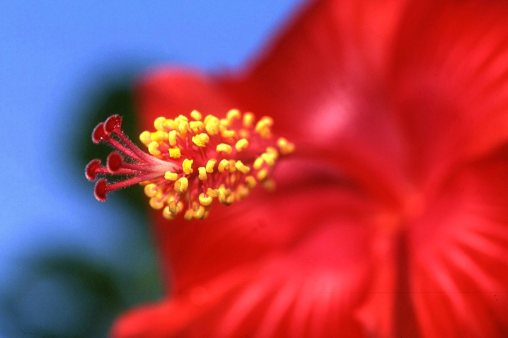 Hibiscus - ID: 3268039 © Mary B McGrath