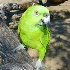© Mary B McGrath PhotoID# 9612872: Parrot
